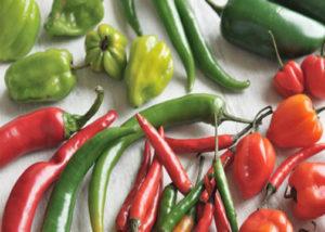 wiki-chillies