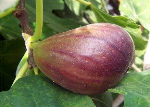 wiki-figs