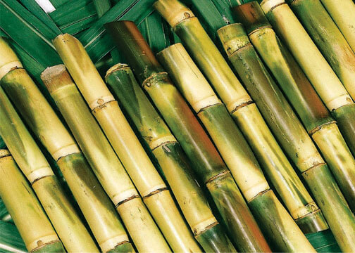Pakistan Sugarcane Crop Survey