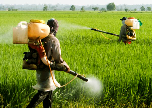 Pesticides & Weedicides