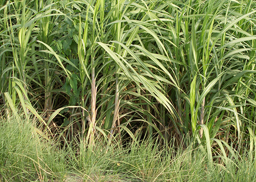 Pakistan Second Sugarcane Crop Survey 2016-17