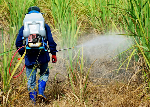 Pakistan Sugarcane Pesticides