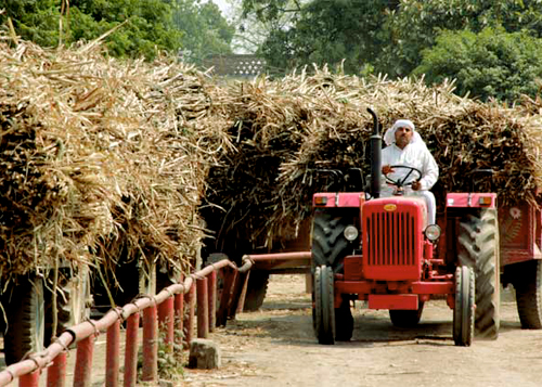Sugarcane Farmer Advisory
