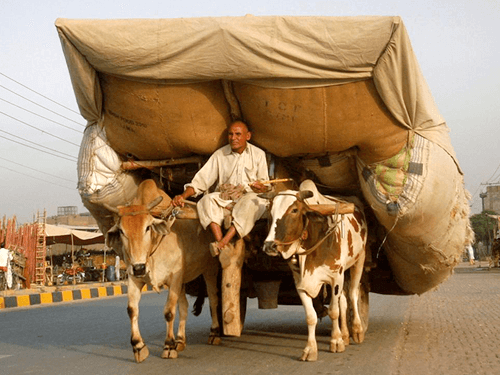 bullock carts agri transportation