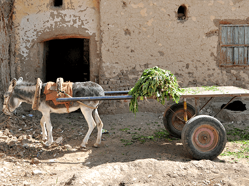donkey carts agri transportation