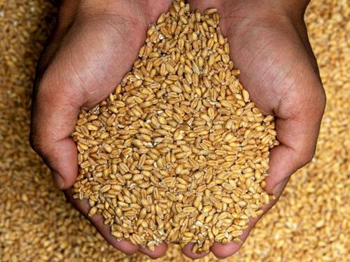 Wheat Crop Target