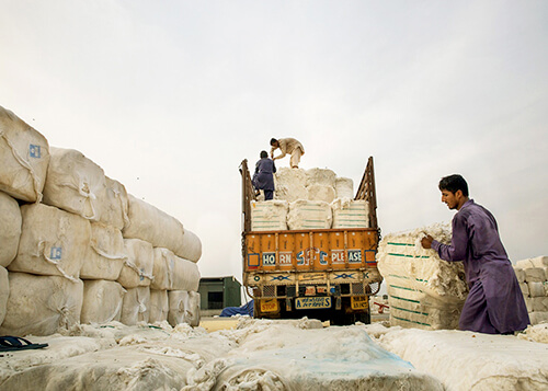 Cotton Export in Pakistan